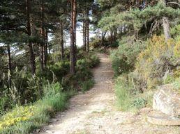 Camino050
