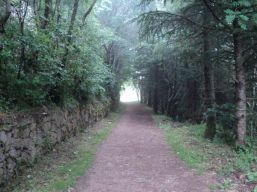 Camino053