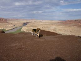 Glen Canyon14