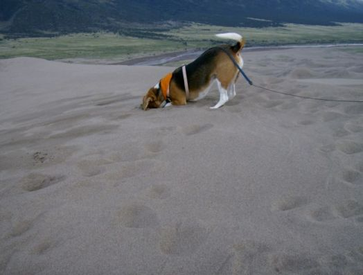 Great Sand Dunes NP6