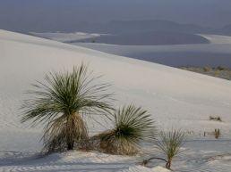 White Sands04