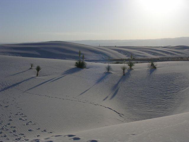 White Sands12