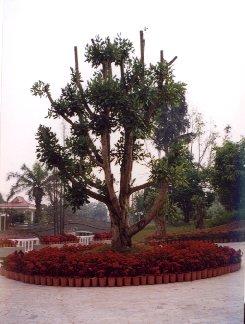 Yunnan30
