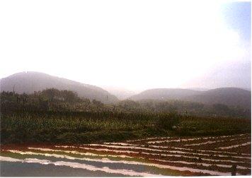 Yunnan39