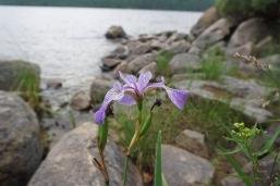 2016 Missinaibi Lake, Ontario - 12 of 37